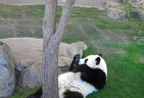 おやつの余韻を楽しむ桜浜と、木の上の桃浜(10).jpg