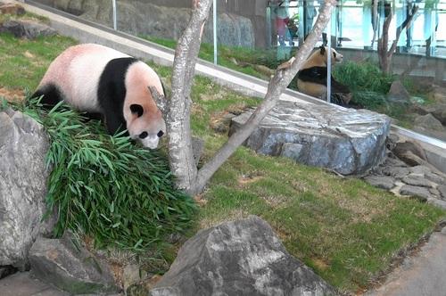 おやつを食べた後、竹を食べる陽浜(11).jpg