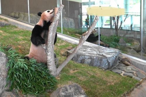 おやつを食べた後、竹を食べる陽浜(14).jpg