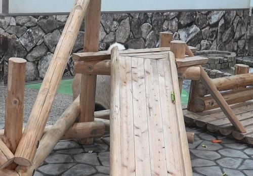 にんじんを食べる良浜のジャマをする結浜(11).jpg