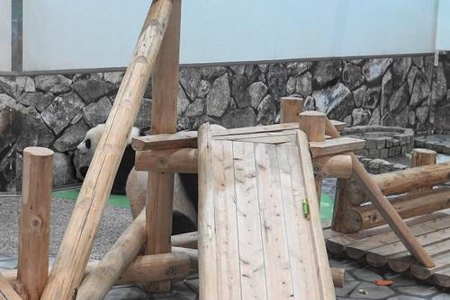 にんじんを食べる良浜のジャマをする結浜(15).jpg