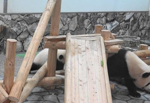にんじんを食べる良浜のジャマをする結浜(18).jpg