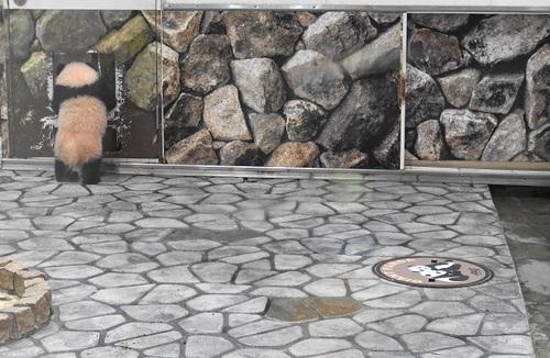 再登場する良浜と、収納扉を調べる結浜(1).jpg