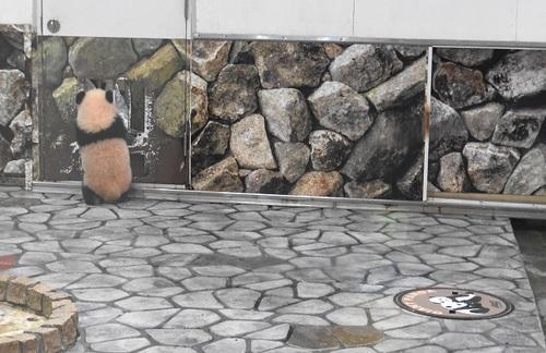 再登場する良浜と、収納扉を調べる結浜(2).jpg