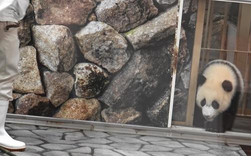 収納される良浜を追いかける結浜(24).jpg
