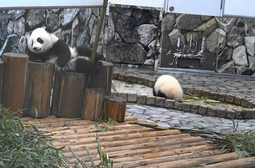 収納前にモゾモゾする桜浜と桃浜1(17).jpg