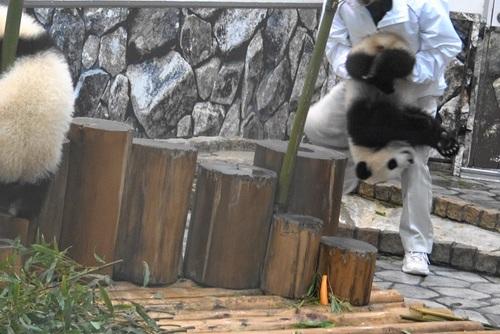 収納前にモゾモゾする桜浜と桃浜2(11).jpg