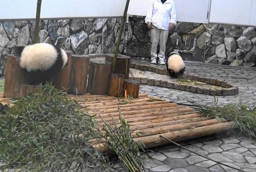 収納前にモゾモゾする桜浜と桃浜2(8).jpg