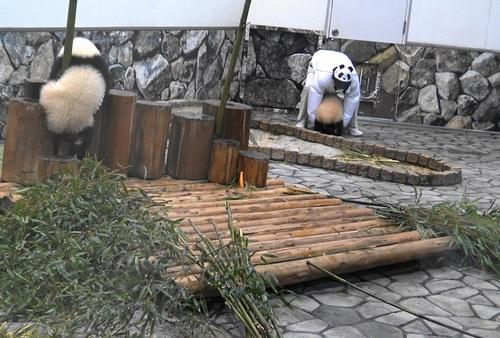 収納前にモゾモゾする桜浜と桃浜2(9).jpg