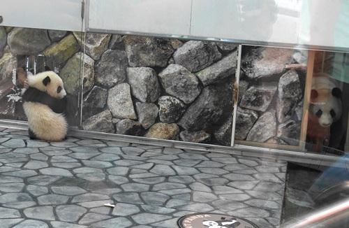 屋内運動場に登場する良浜と結浜(20).jpg