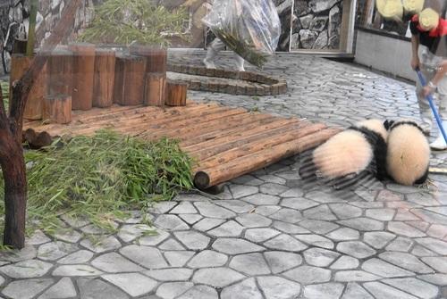 揃って飼育員さんのジャマをする桜浜と桃浜(17).jpg