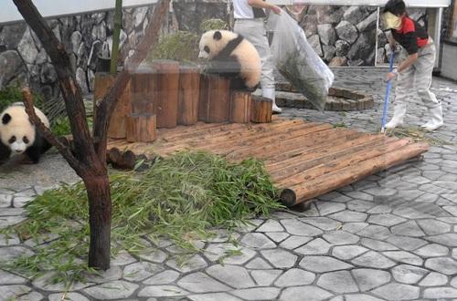 揃って飼育員さんのジャマをする桜浜と桃浜(20).jpg