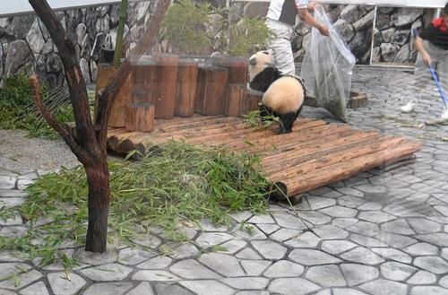 揃って飼育員さんのジャマをする桜浜と桃浜(28).jpg