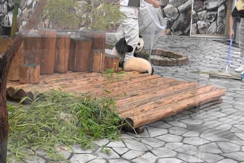 揃って飼育員さんのジャマをする桜浜と桃浜(29).jpg