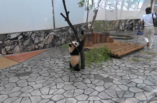 揃って飼育員さんのジャマをする桜浜と桃浜(3).jpg