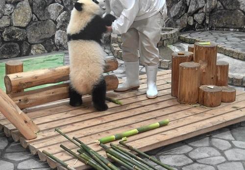 撤収する飼育員さんを追いかける結浜(15).jpg