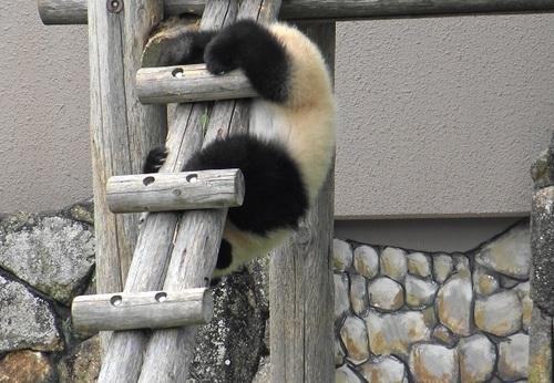 梯子を下りる途中で落っこちる結浜(10).jpg