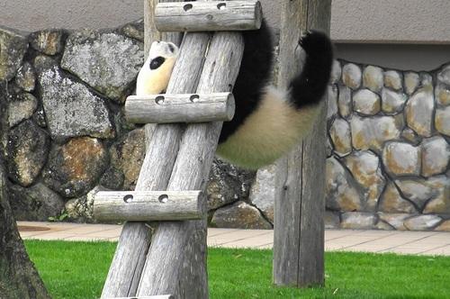 梯子を下りる途中で落っこちる結浜(13).jpg
