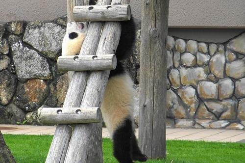 梯子を下りる途中で落っこちる結浜(14).jpg