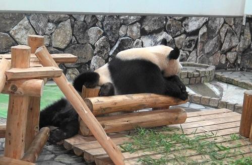 櫓から滑り落ちて、竹を囓る結浜(10).jpg