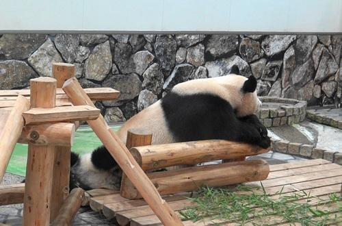 櫓から滑り落ちて、竹を囓る結浜(11).jpg