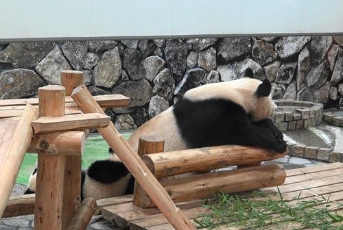 櫓から滑り落ちて、竹を囓る結浜(12).jpg