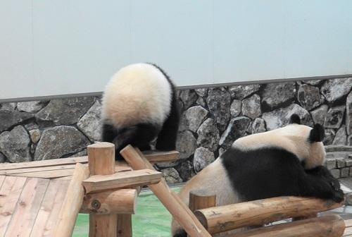 櫓から滑り落ちて、竹を囓る結浜(2).jpg