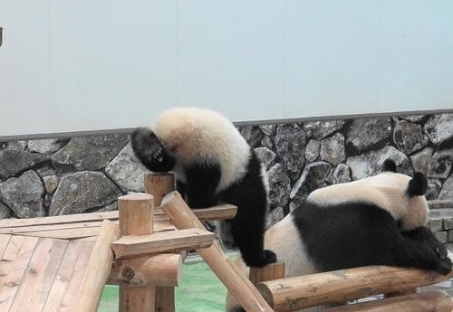 櫓から滑り落ちて、竹を囓る結浜(3).jpg