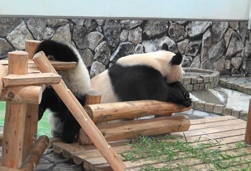 櫓から滑り落ちて、竹を囓る結浜(8).jpg