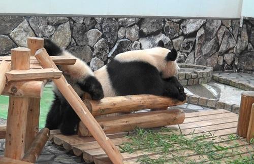 櫓から滑り落ちて、竹を囓る結浜(9).jpg