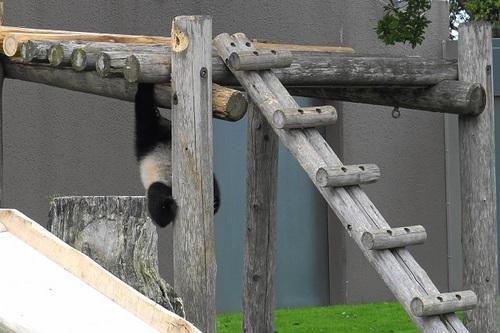 櫓から落ちた後、櫓に上る結品(3).jpg