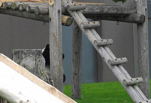 櫓から落ちた後、櫓に上る結品(7).jpg