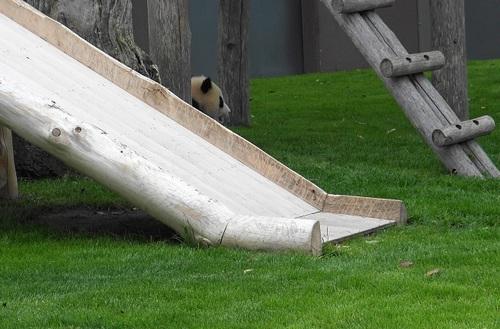 櫓から落ちた後、櫓に上る結品(9).jpg