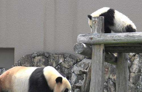 櫓から落っことされる結浜(1).jpg