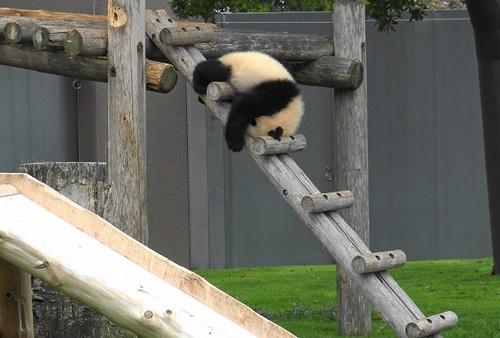 櫓から難易度の高い降り方をする結浜(12).jpg
