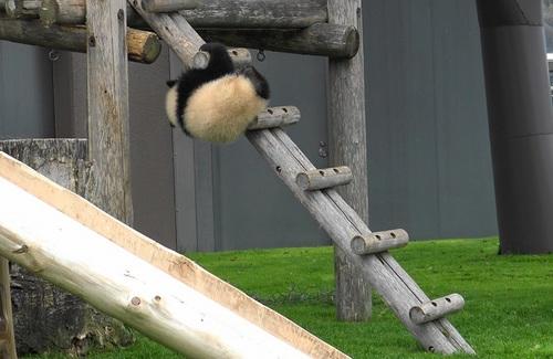 櫓から難易度の高い降り方をする結浜(16).jpg