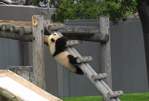 櫓から難易度の高い降り方をする結浜(18).jpg