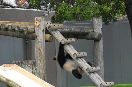 櫓から難易度の高い降り方をする結浜(19).jpg