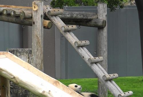 櫓から難易度の高い降り方をする結浜(21).jpg