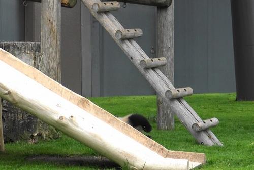 櫓から難易度の高い降り方をする結浜(22).jpg