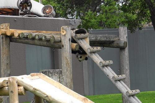櫓から難易度の高い降り方をする結浜(9).jpg