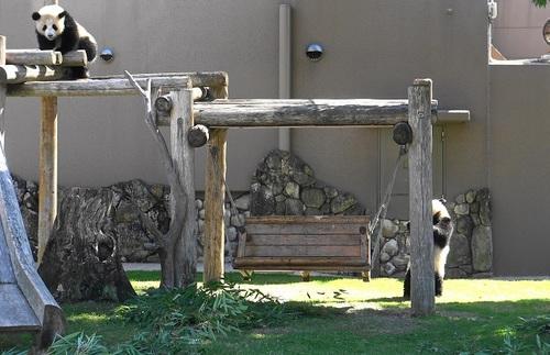 櫓の上でマッタリする桜浜と、ブランコ周りでウロウロする桃浜(18).jpg