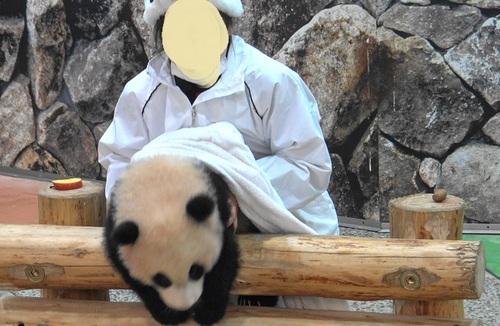 清掃中に飼育員さんに遊んでもらう結浜(21).jpg