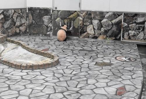 清掃中に飼育員さんに遊んでもらう結浜(26).jpg