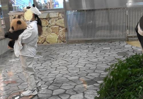 清掃中に飼育員さんに遊んでもらう結浜(4).jpg