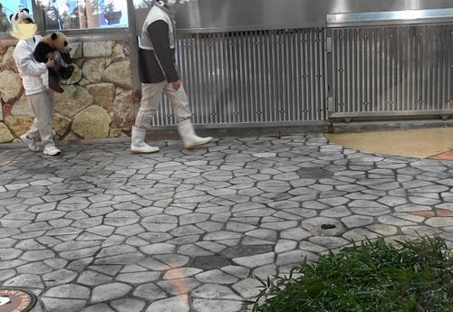 清掃中に飼育員さんに遊んでもらう結浜(5).jpg