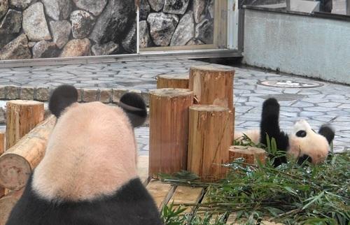 竹を丸太に持ち上げられない結浜(40).jpg