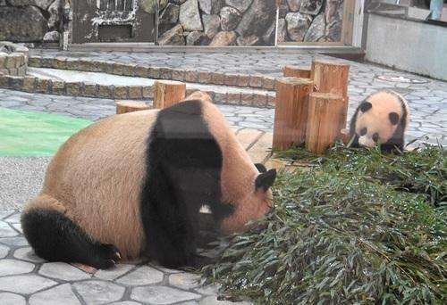 竹を食べたい良浜に邪険にされる結浜(2).jpg