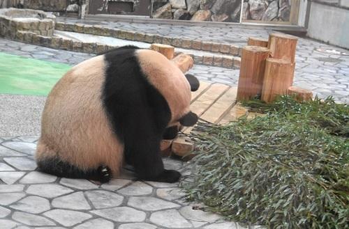 竹を食べたい良浜に邪険にされる結浜(5).jpg