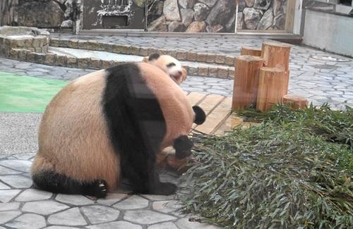 竹を食べたい良浜に邪険にされる結浜(6).jpg